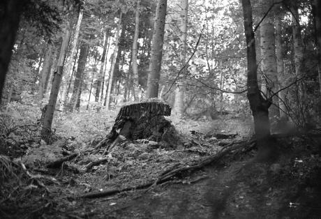 Stumpf im Walde