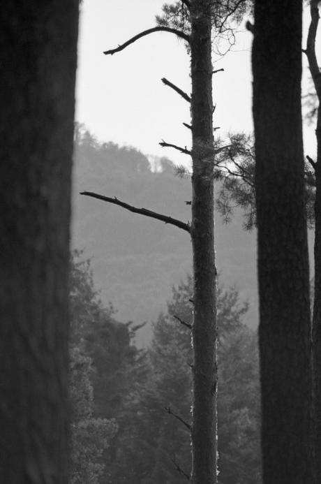 Baum im Walde