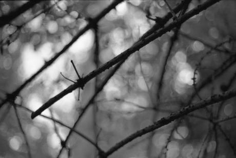 Ast im Walde