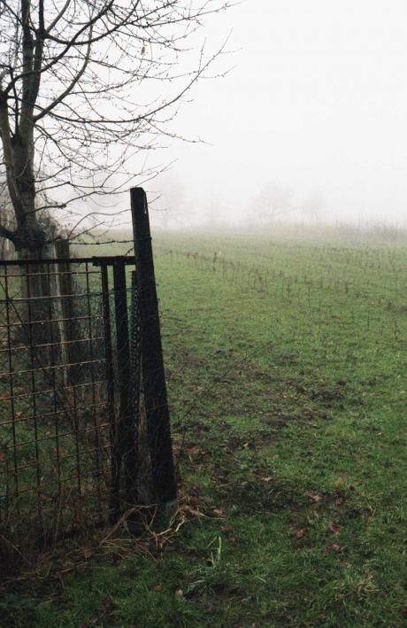 Nebel im Garten